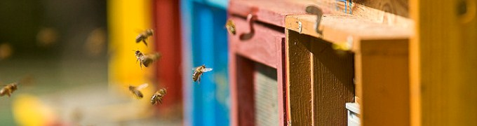 honeybees image